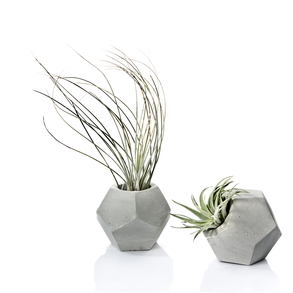 Etsy Pop Up on John Lewis Rooftop - Pasinga concrete planter