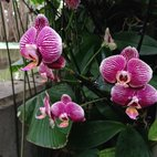 Orchids Festival