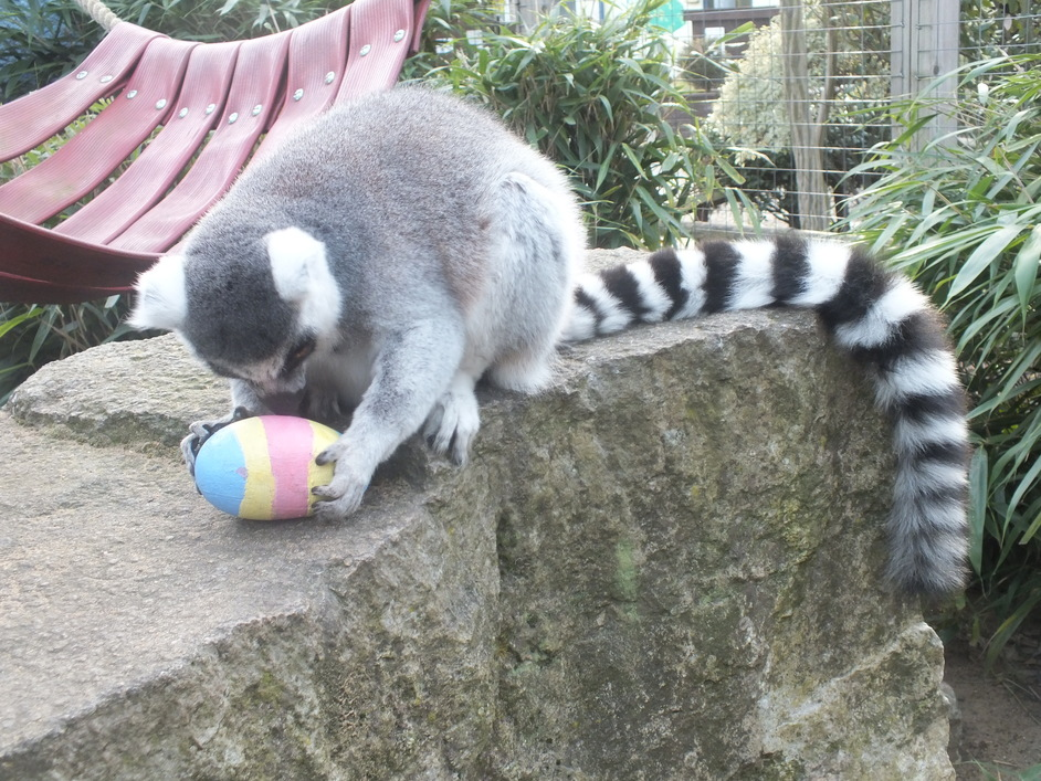 Easter Egg Hunt at Battersea Park Zoo