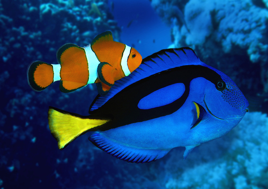 the real fish behind nemo and dory at sea life london