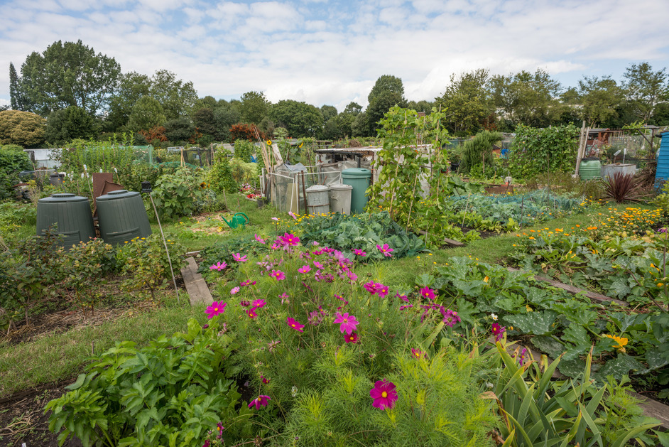 Open Garden Squares Weekend - Fulham Palace Allotments