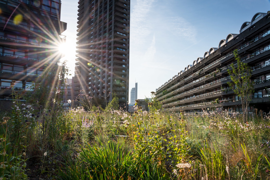Open Garden Squares Weekend - Beech Gardens - Barbican Estate (c) Diana Jarvis