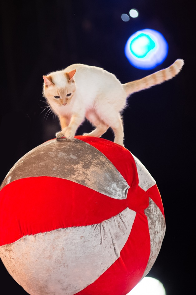 Zippos Circus: Celebration - Zippos Circus, 'Celebration'
