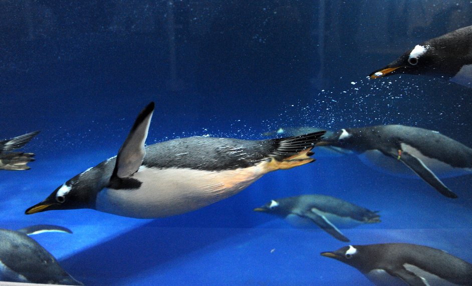 Sea Life London Aquarium - Penguin Point at SEA LIFE London Aquarium