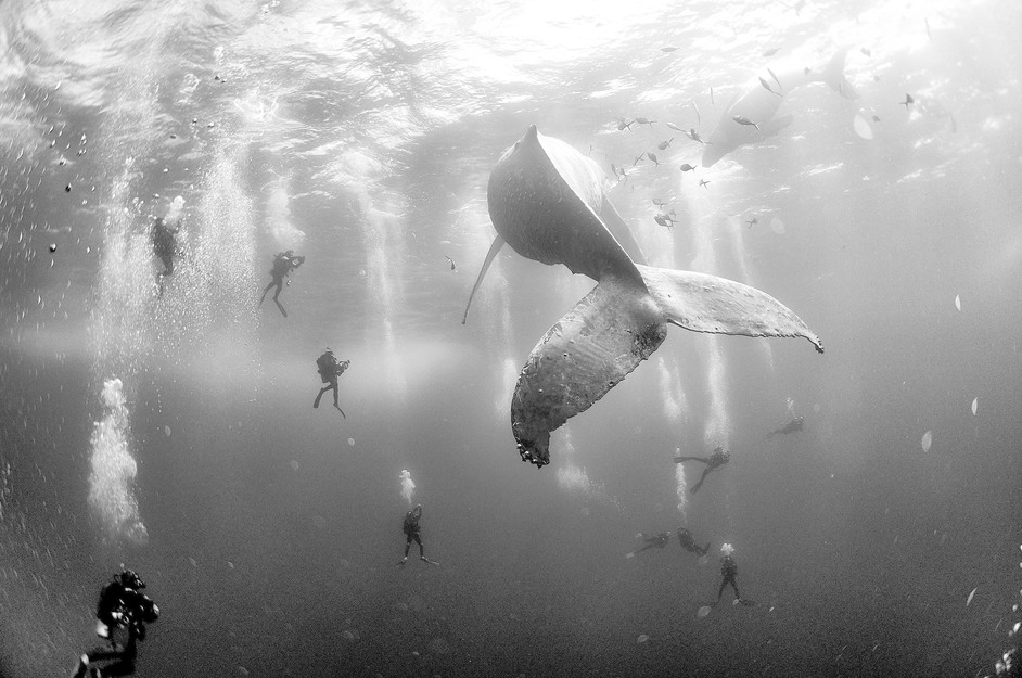 World Press Photo - (c) Anuar Patjane Floriuk - Whale Whisperers