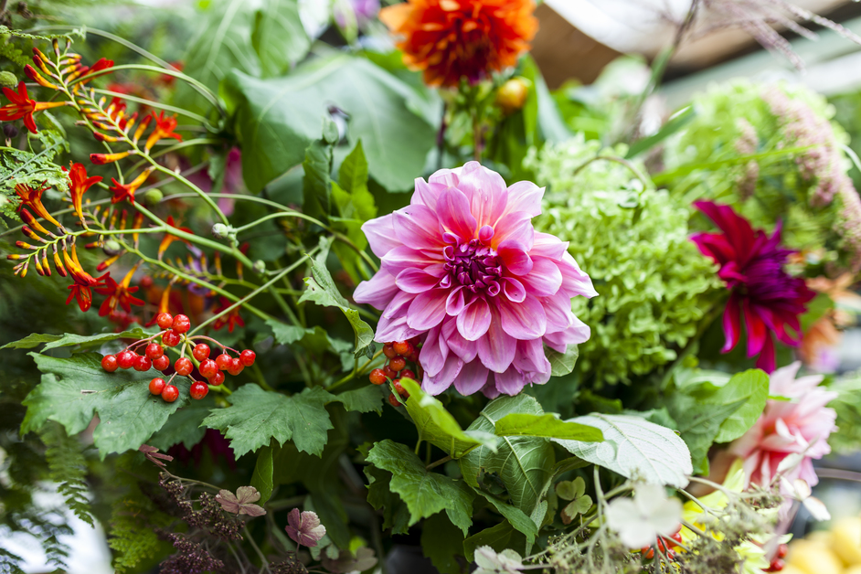 Grow Your Own Cut Flower Patch with Georgie Newbery