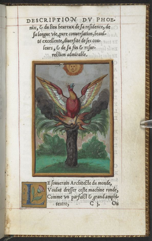 Harry Potter: A History of Magic - Guy de la Garde, L'Histoire et description du Phoenix, 1550 (c) British Library