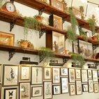 Mr Fogg's House of Botanicals