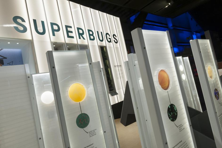 Superbugs: The Fight For Our Lives - Bacteria in the Superbugs exhibition © The Board of Trustees of the Science Museum