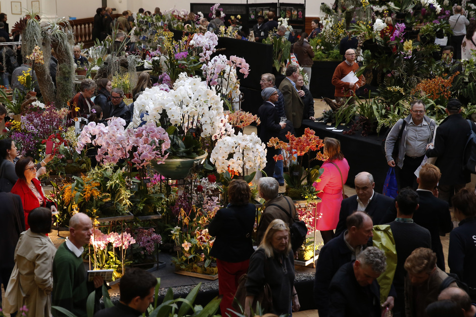 RHS London Orchid Show and Plant Fair - RHS London Spring Plant and Orchid Show at the Royal Horticultural Halls in London, photo: RHS