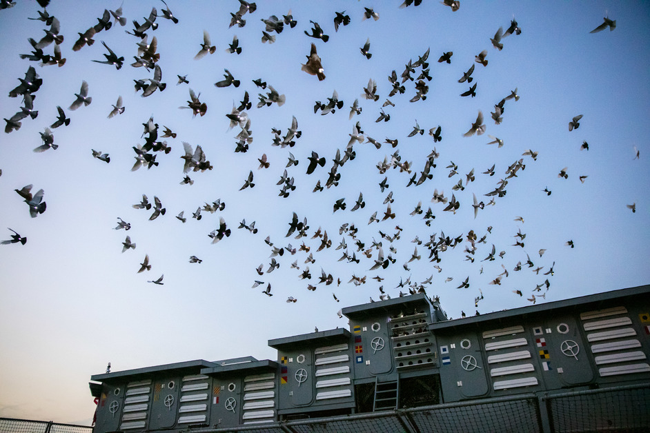 Greenwich and Docklands International Festival - Fly By Night Image, image: Tod Seelie courtesy Creative Time