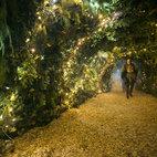 Backyard Cinema: Christmas Labyrinth