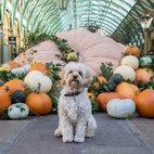 Halloween at Covent Garden
