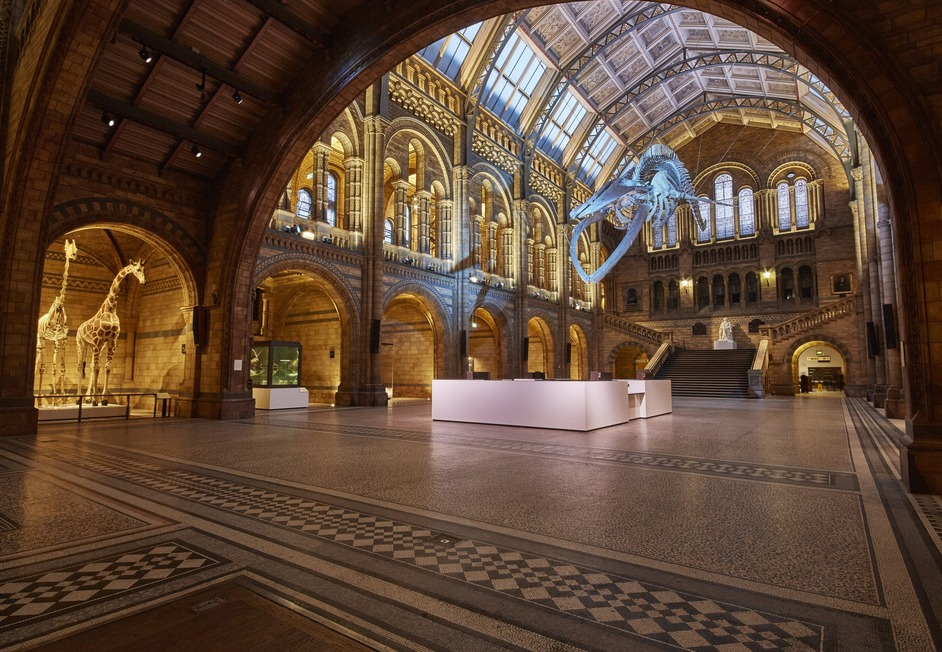 Natural History Museum - Hintze Hall - photo: Trustees of the Natural History Museum, 2018
