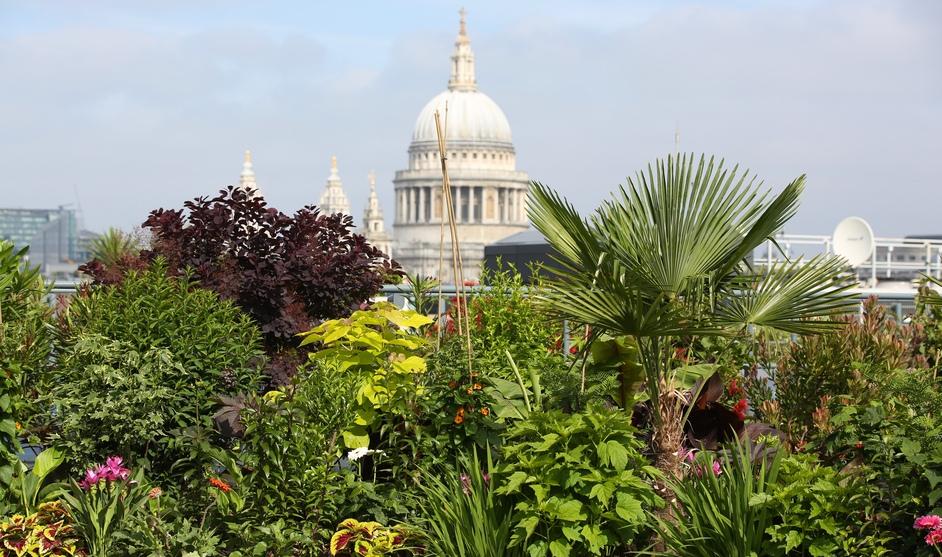 Open Garden Squares Weekend - Cannon Bridge Roof Gardens © Anna Barclay