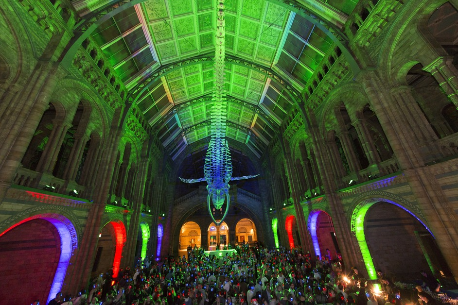 New Year's Eve: Creatures of the Night - photo: Natural History Museum