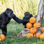Halloween at London Zoo