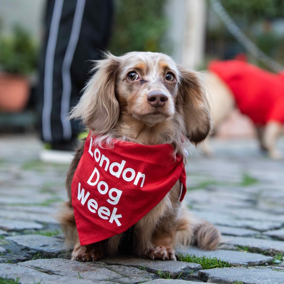POSTPONED London Dog Week