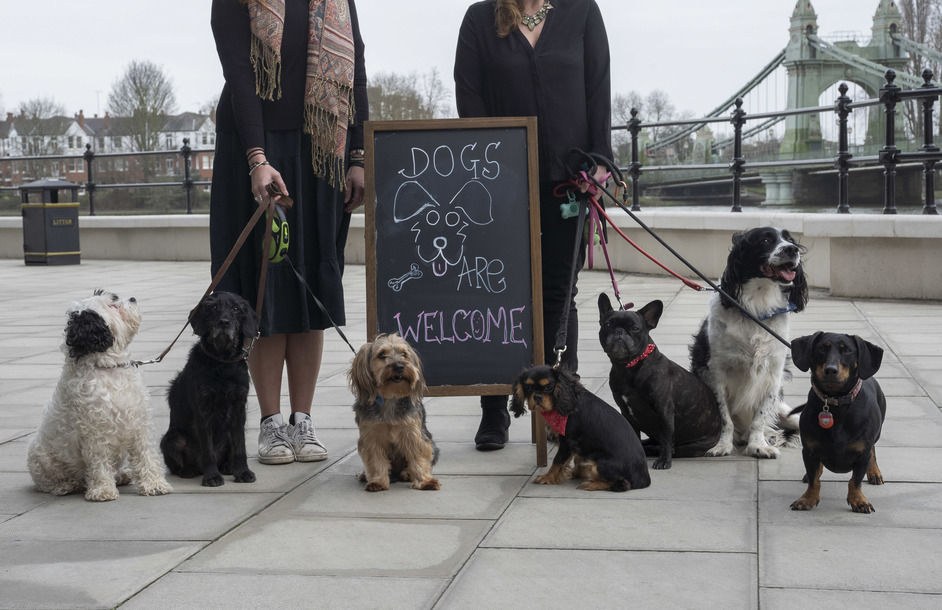 Studio 8 Cafe and Bar - Dogs welcome at Riverside Studios, photo: Jeff Moore