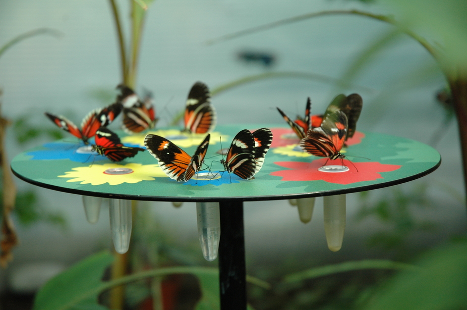 ZSL London Zoo: The Very Hungry Caterpillar - Butterfly Paradise © ZSL London Zoo